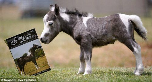 The Famous Little Pony Horse   All About Fun