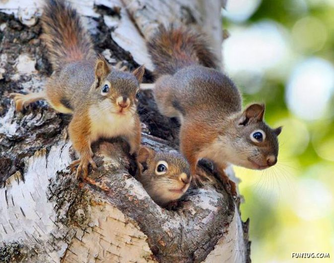 Cute squirrels in love - photo#22